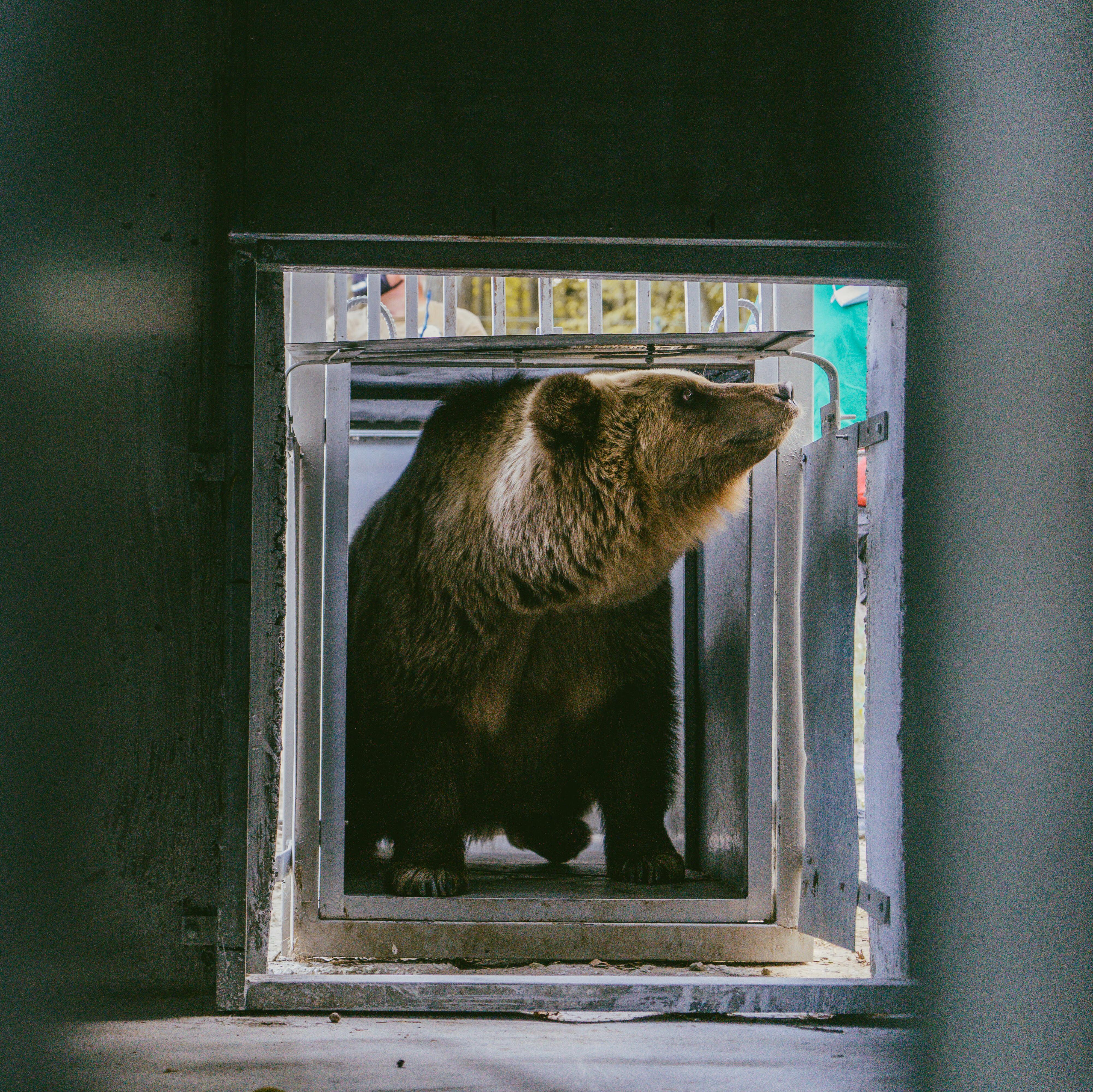 Jetzt können die Bären ein Leben in einer naturnahen Umgebung genießen