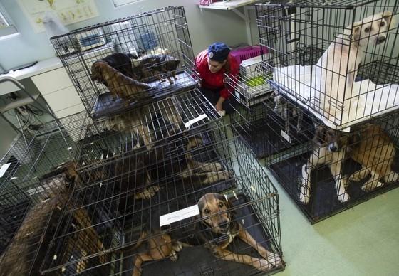 Die Streuner werden gefangen und sterilisiert