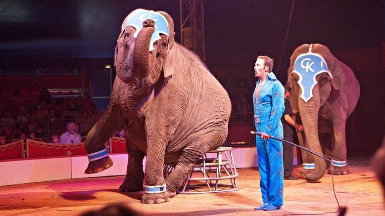 Un éléphant exploité dans un cirque