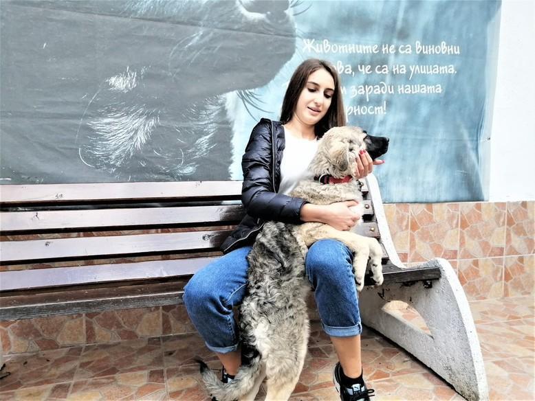 Куче Тутси пред банкя
