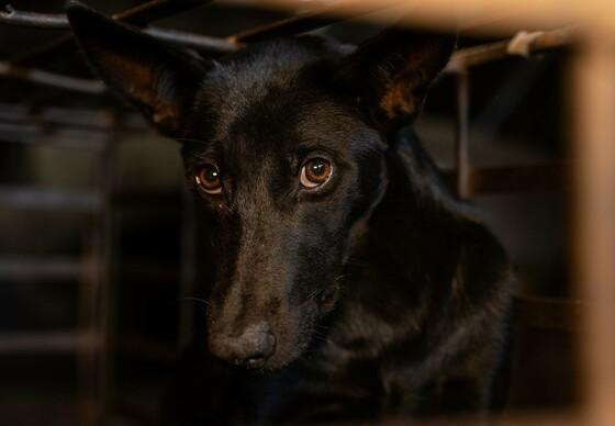 Hund im Käfig eines Schlachthauses