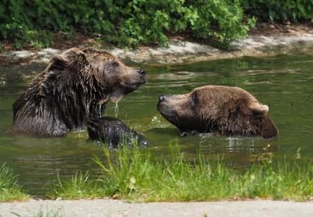 Gerette Bären
