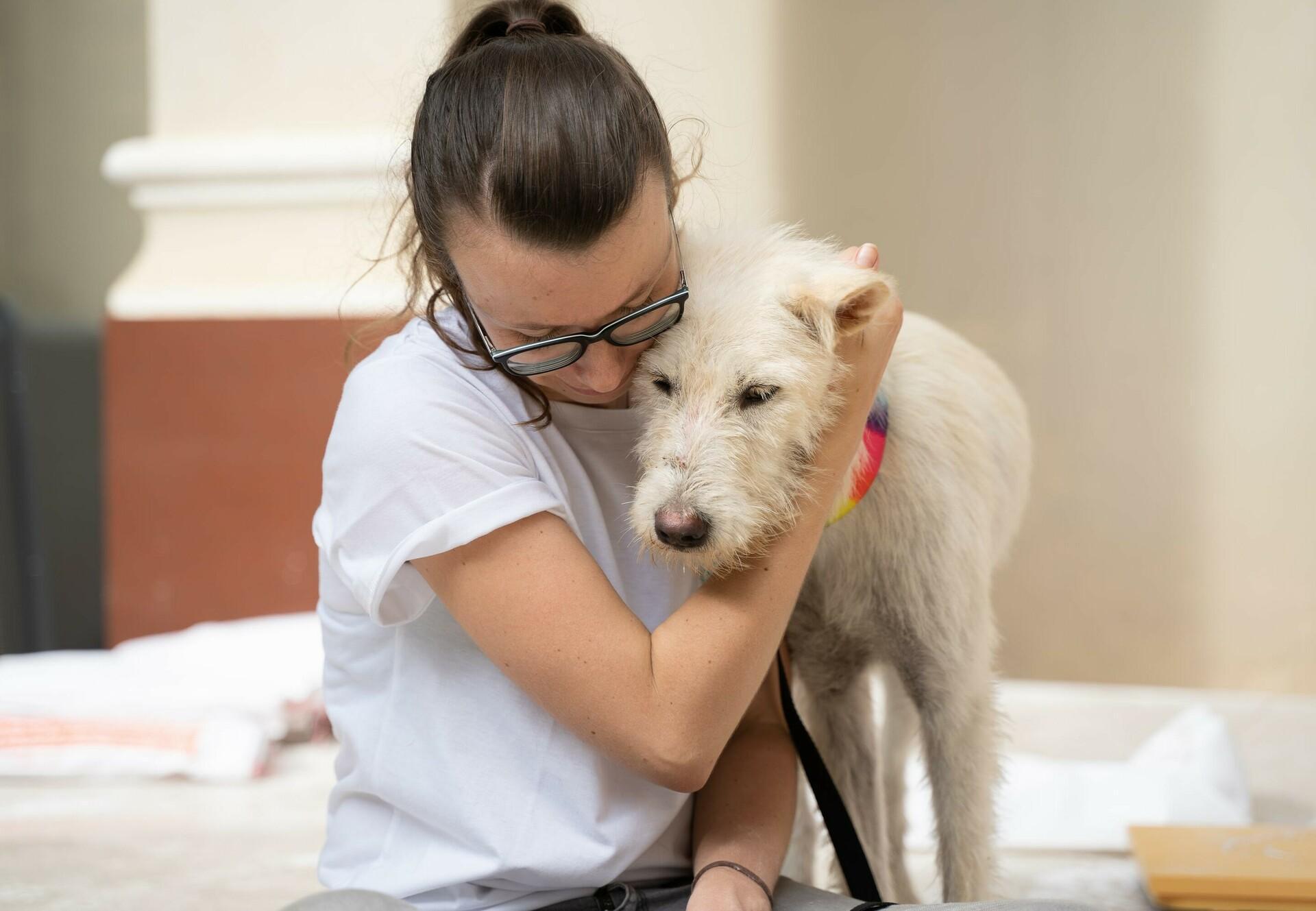 Hund Apollo wurde gerettet