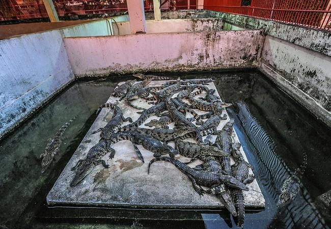 Krokodil Farm