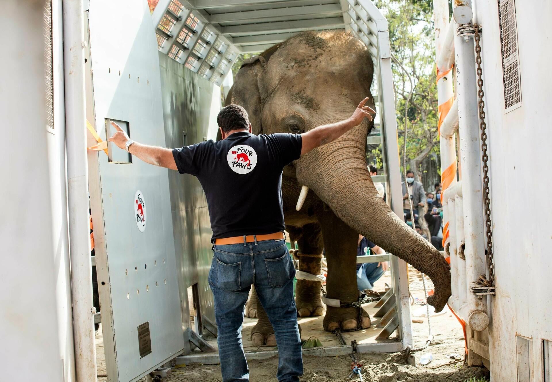 Elefant Kaavan startet seine Reise nach Kambodscha