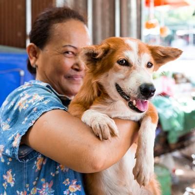 Lion, sauvé du commerce de viande de chien