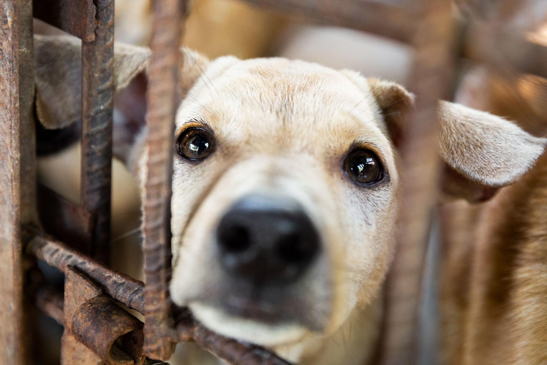 Save dog and cats in Southeast Asia