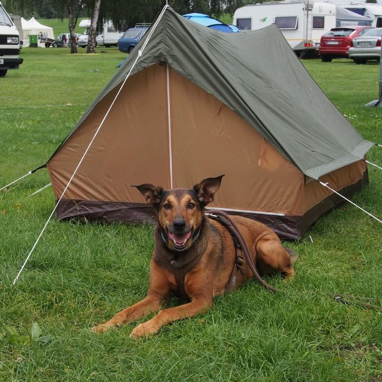 Hund vor Zelt