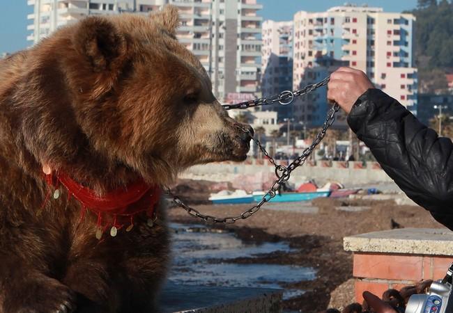 L'ourse Jeta avant son sauvetage