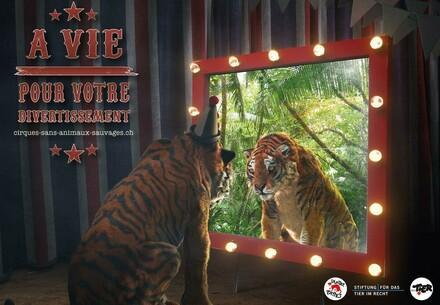 Non aux animaux sauvages dans les cirques
