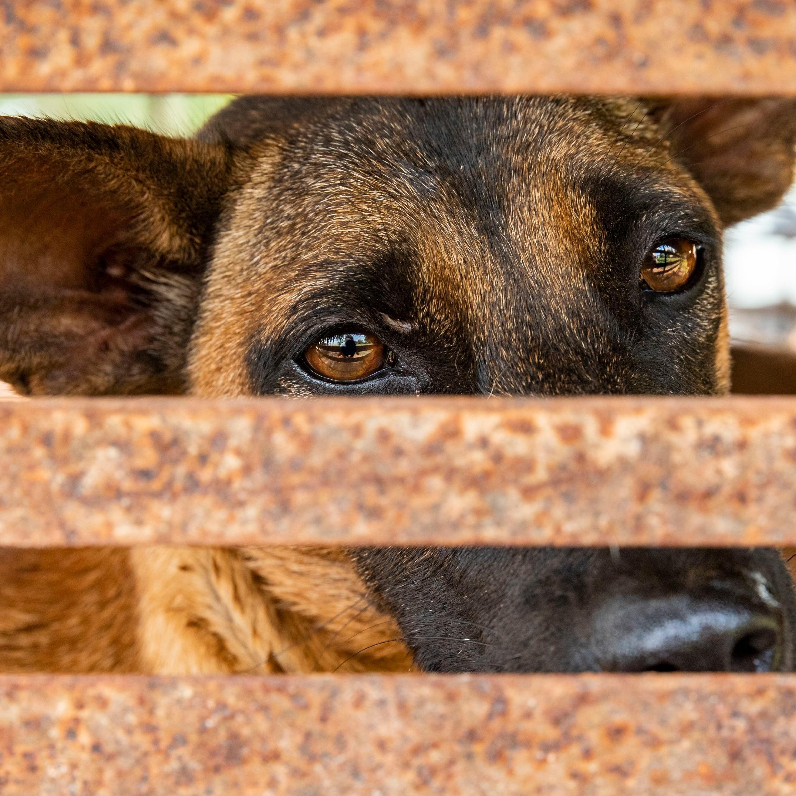 Dieser Hund konnte von VIER PFOTEN gerettet werden.