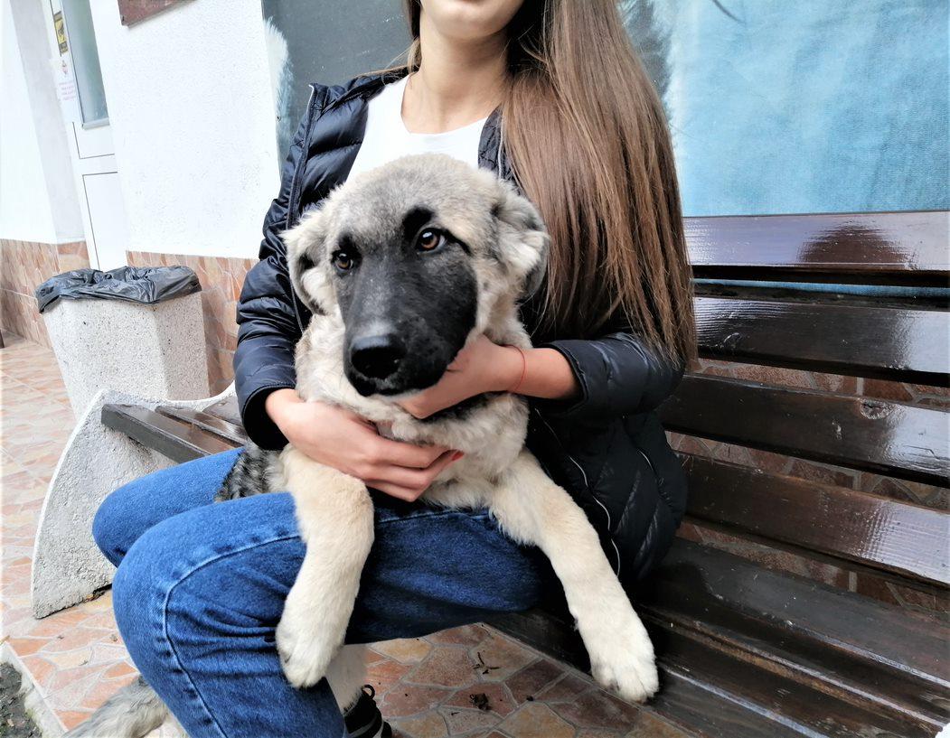 куче Тутси пред банкя с новата си осиновителка