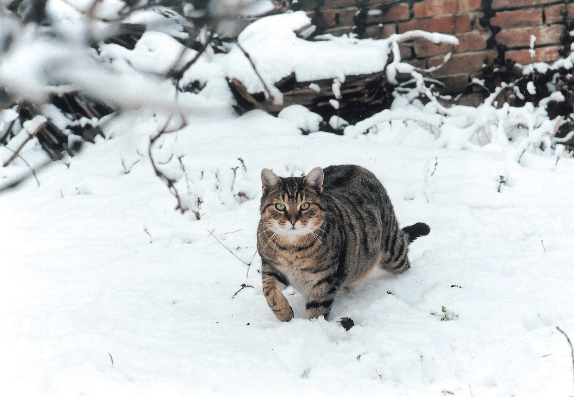 Dringend Platze Fur Verwilderte Hauskatzen Gesucht Katzen