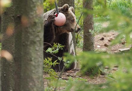Enrichment in BEAR SANCTUARY