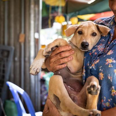 Luke, sauvé du commerce de viande de chien