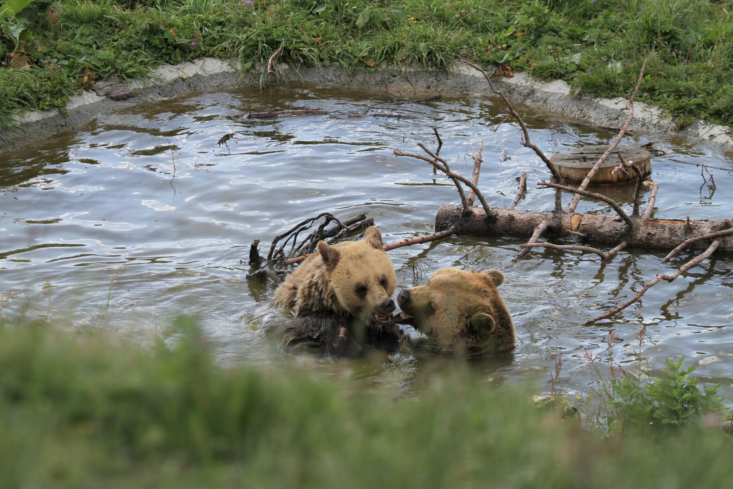 Meimo und Amelia im Teich