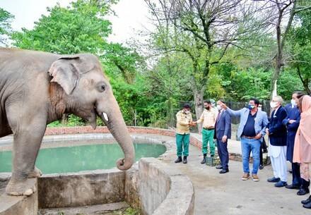President and First Lady of Pakistan bid farewell to elephant Kaavan