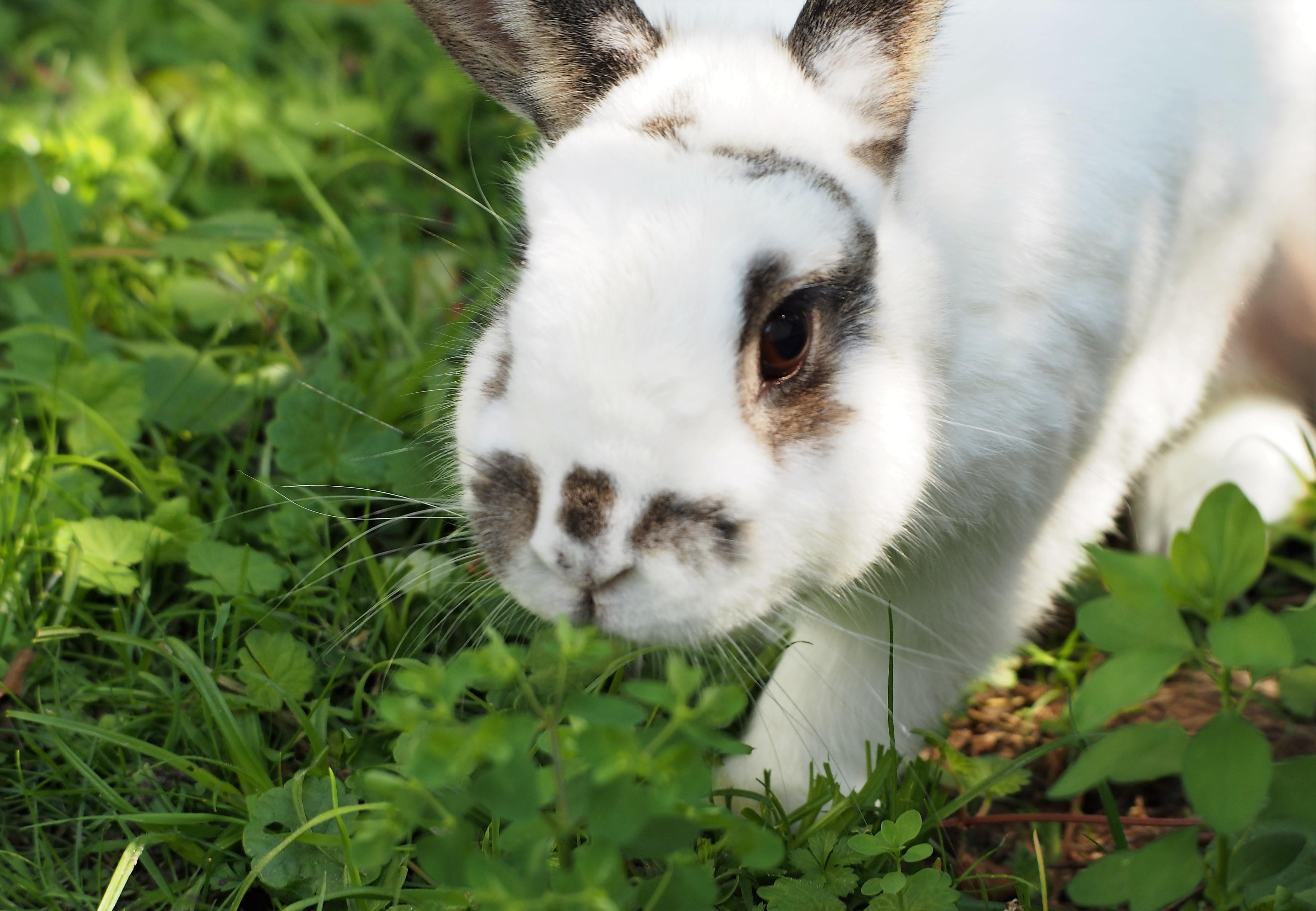 Close up of a white rabbit