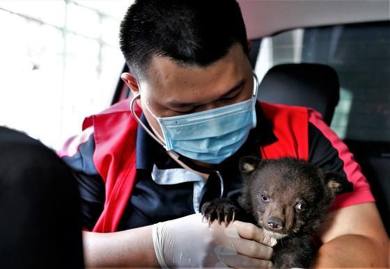 Bear cub Mochi rescued from illegal wildlife trade