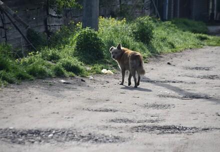 Programmes permanents d'aide aux animaux errants