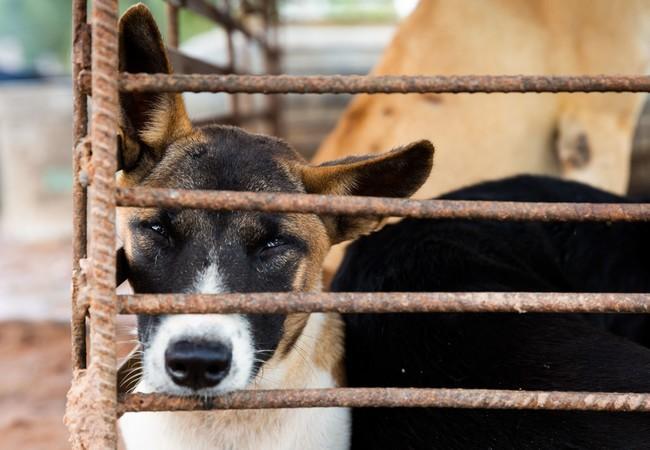 Hond Lucky in een kooi
