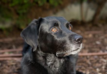 Hund an Leine (c) VIER PFOTEN