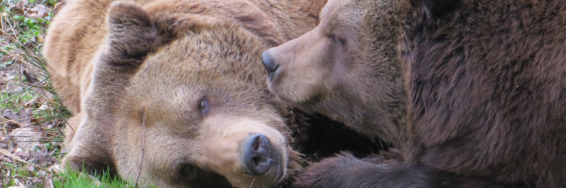 Bären Siggi and Balou