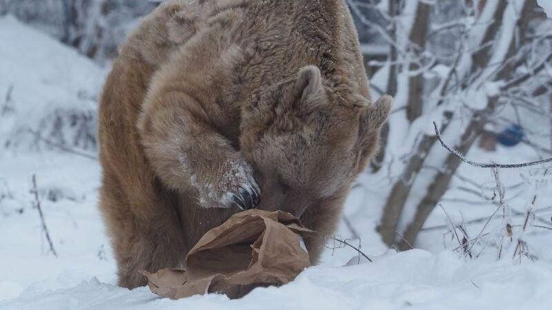 Bär Jerry bearbeitet seinen Futtersack. (c) VIER PFOTEN