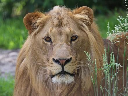 Leeuw Terez