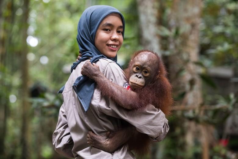 Orphan orangutan Cantik with caregiver Aoliya