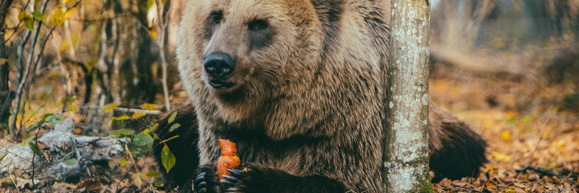 Support our bears in Domazhyr