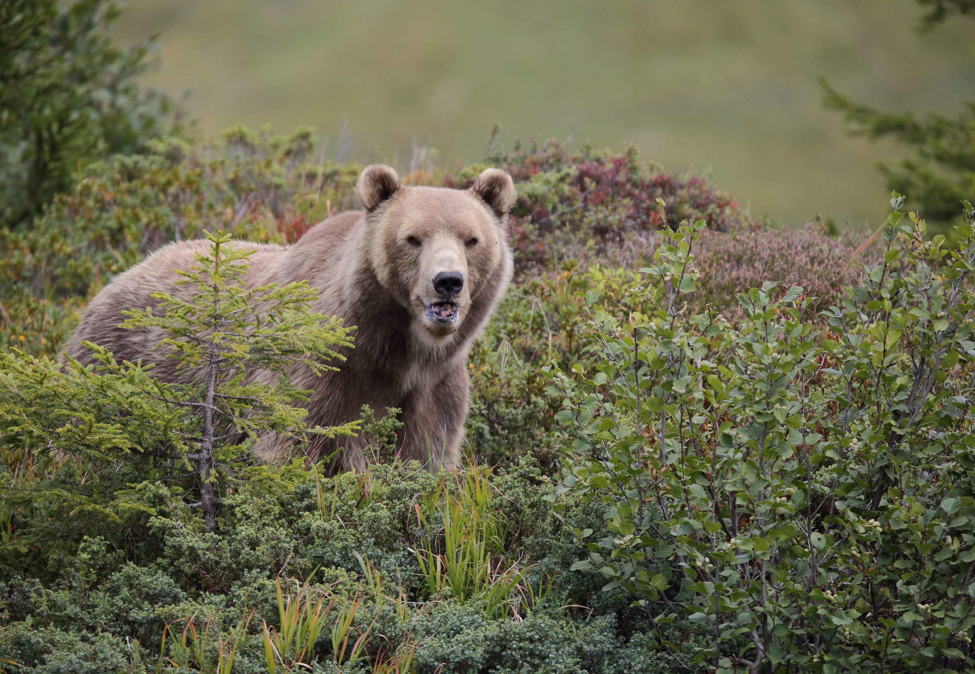 Arosa Bear Sanctuary