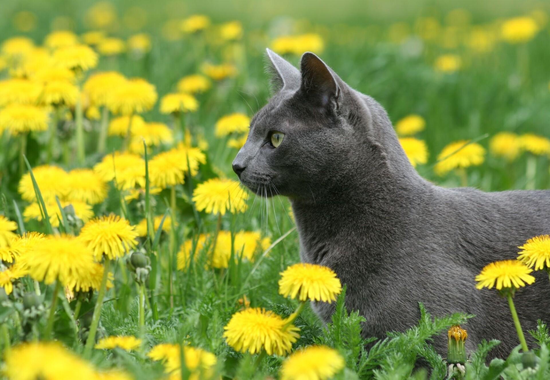 Katze in einer Wiese mit Löwenzahn