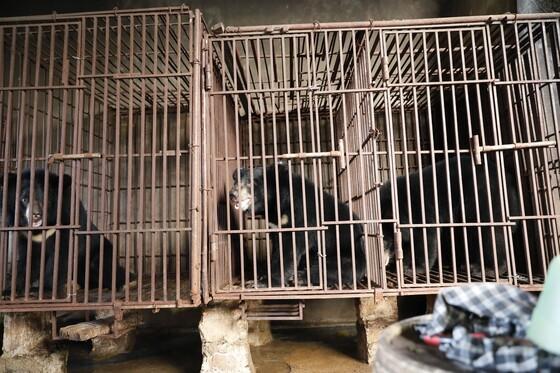 Rettung Chuoi, Tao und Le