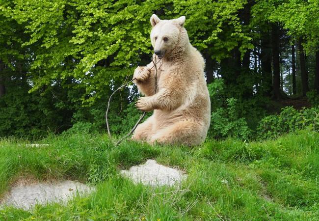 Junger Braunbär sitzt aufrecht in der Wiese und spielt mit Ast