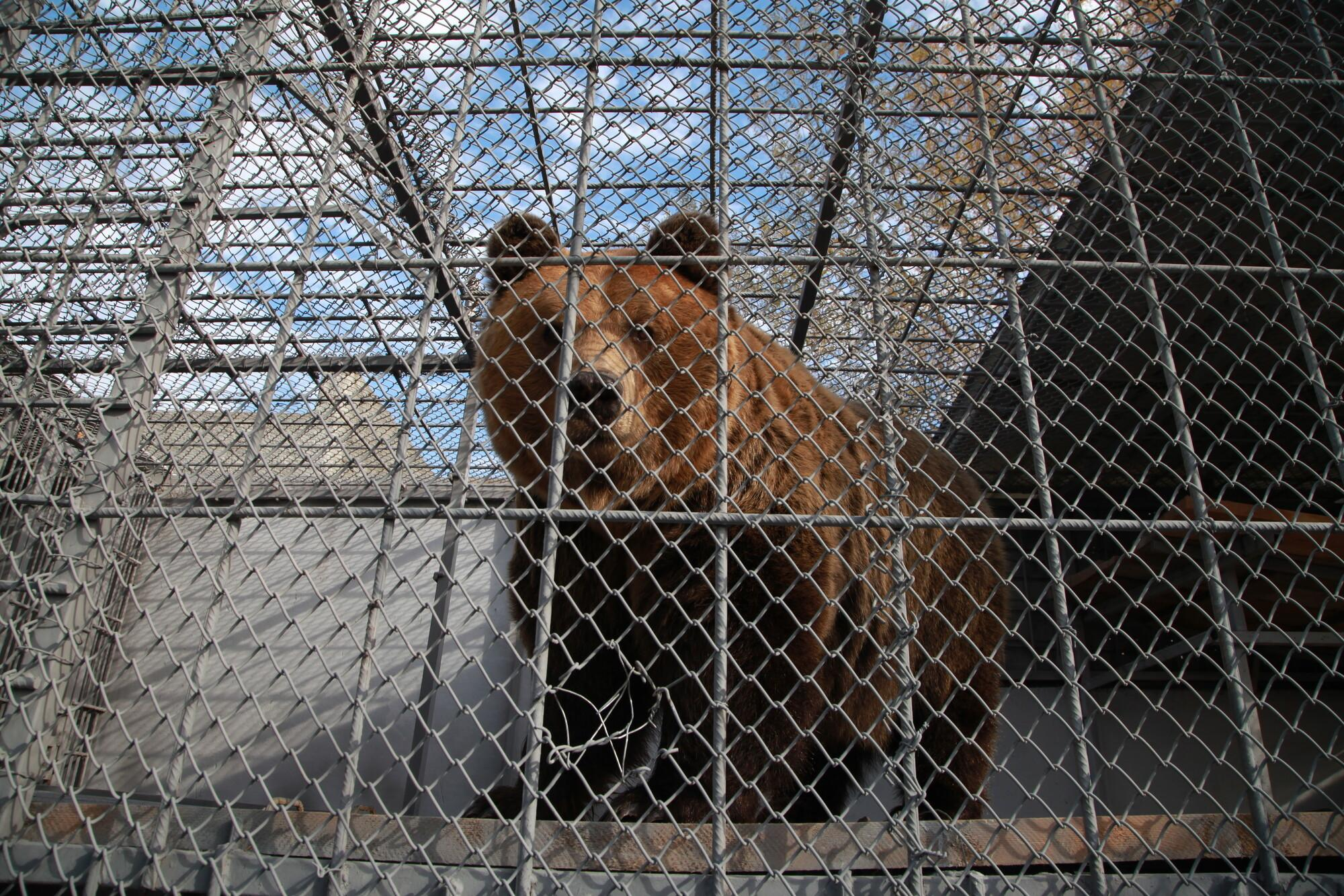 The bears spent a life behind bars