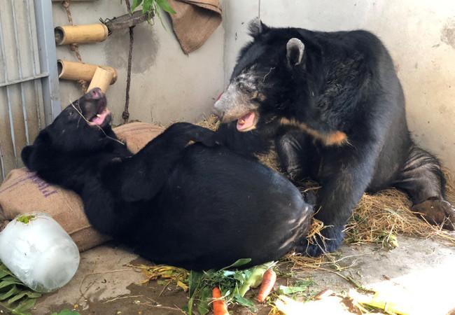 Die geretteten Bären spielen zusammen