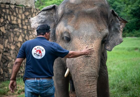 Vet Amir Khalil with an elephant Kaavan