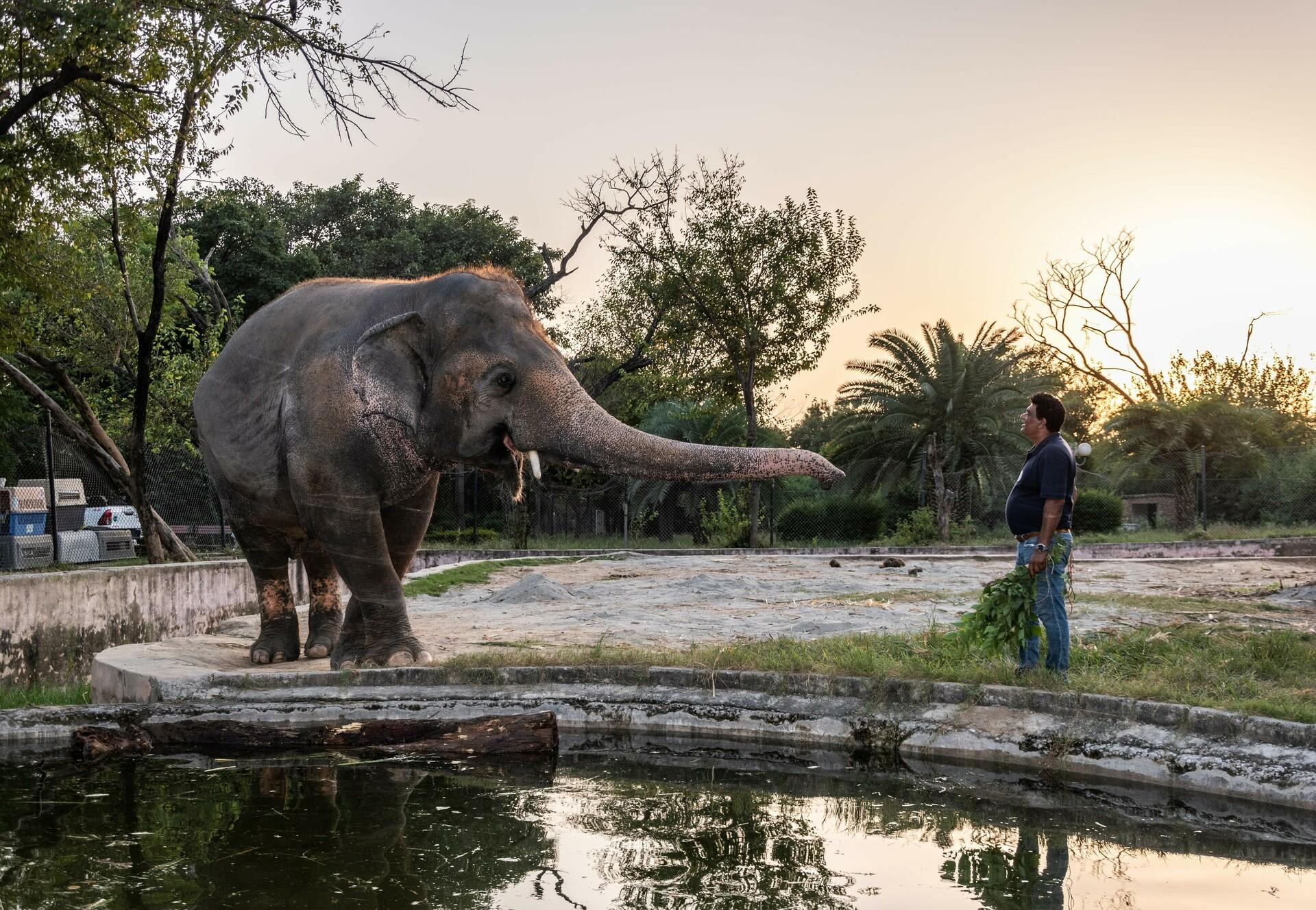 Elephant Kaavan in his enclosure with FOUR PAWS expert, Dr. Amir Khalil