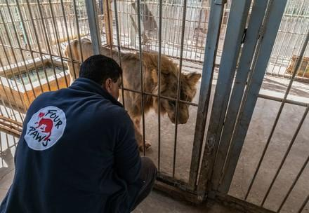 Helping animals in crisis