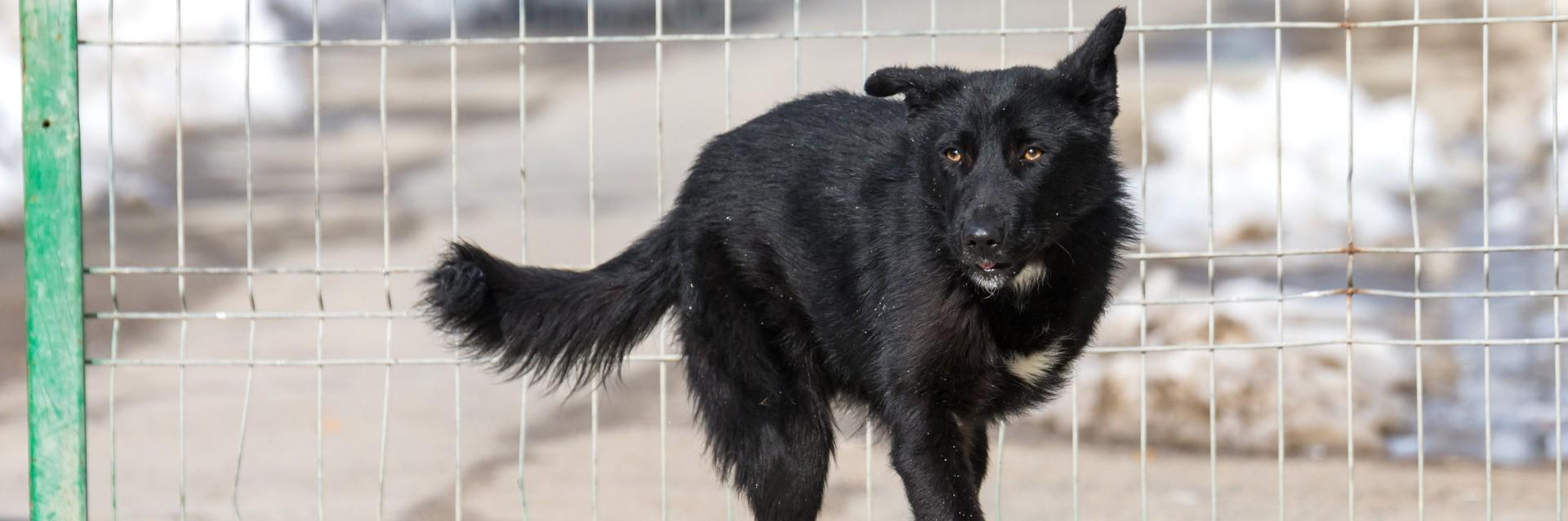 Dog with three legs happy at the shelter