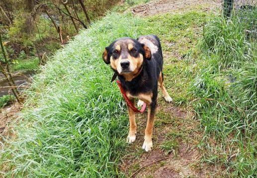Dog Rexy | куче Рекси