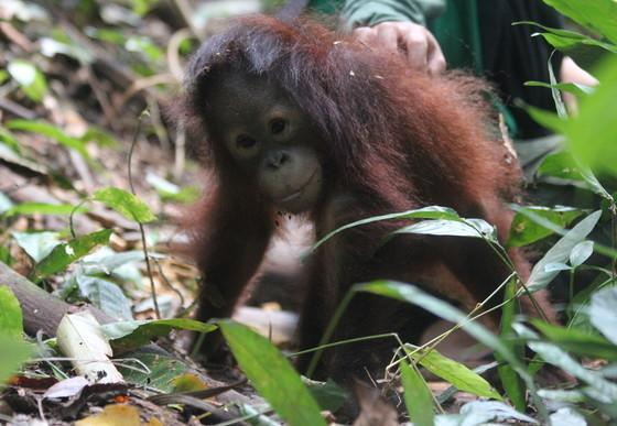 Der kleine Affe Damai