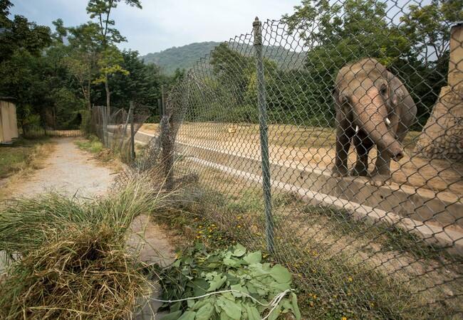 Elefant Kaavan im Marghazar Zoo