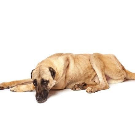 dog-raffy