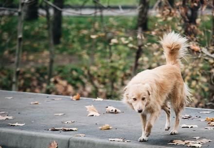 Dog Kaya