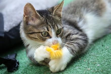 adoptierte Katze