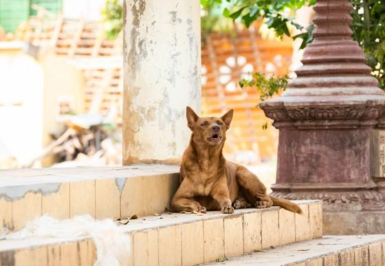 Dog in front of a temple