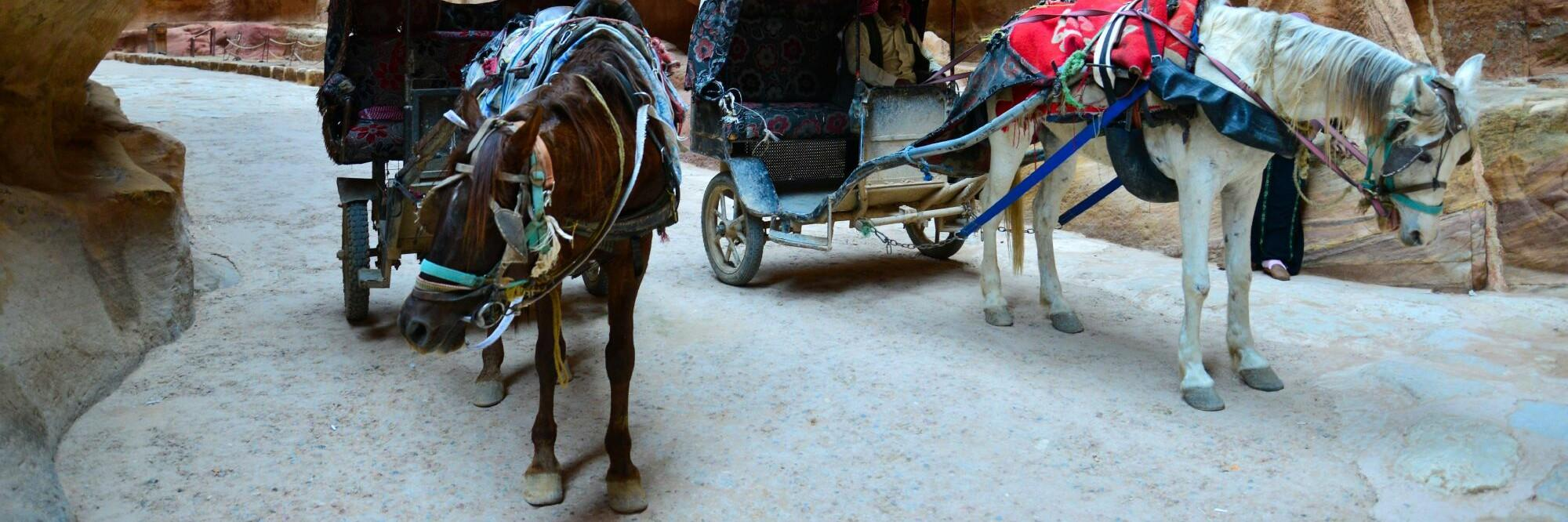 Helping the working horses of Petra