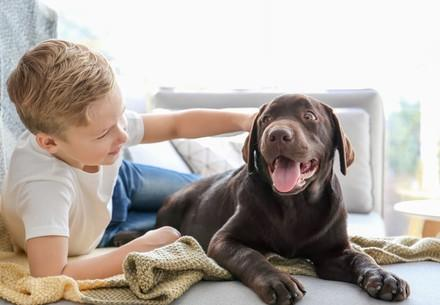 Little boy with dog at home